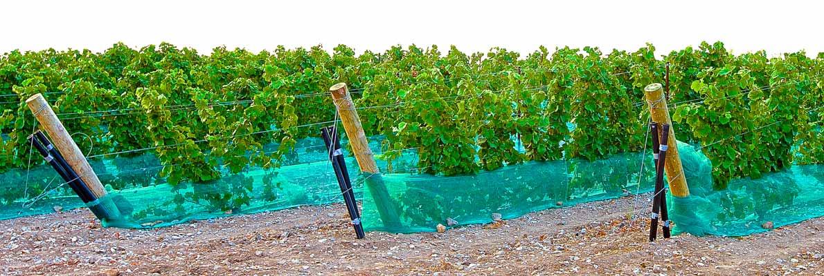Keint-He Vines